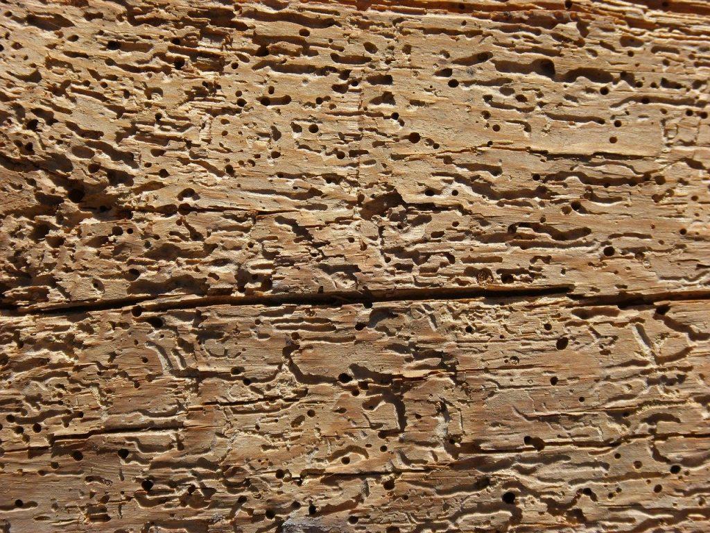 tarli del legno (1)